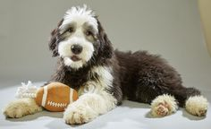 : It's not the football we're excited for when Super Bowl Sunday rolls around. Rather, we'll be tuning in to cheer on cuddly little pups as they compete for our hearts in the Puppy Bowl XII.