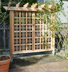 A Garden Trellis And A Rose