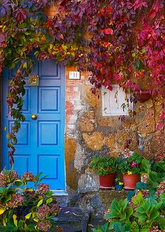 love colorful doors and foliage at the entryway