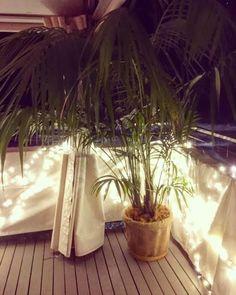 Kentia palm, wedding