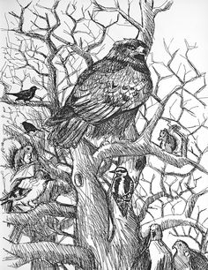 Christopher Lockwood, pen and ink illustration for The Adventures of Eagle & Sass