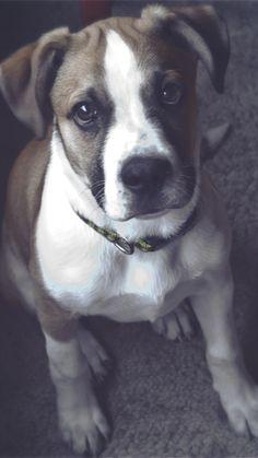 Baixe papel de parede 720x1280 cão, focinho, olhos, Sentar-se, Fundo manchado Samsung Galaxy S3 HD