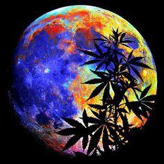 #wakeup #openyoureyes #freeyourmind #kush #dope #420 #710 #stoner #stoned #joint…