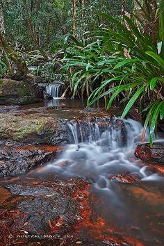 Amazon Jungle Rainforest Animals Pictures Of Animals In
