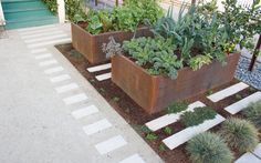 BaDesign, Steel vegetable planters and concrete pavers interspersed with thyme and chamomile.