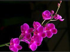Pink dazzling shine