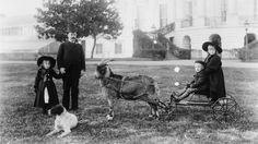#goatvet likes this article about The Great White House Goat Chase - NationalJournal.com