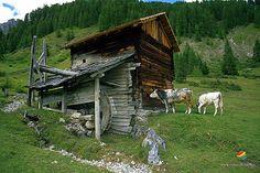 Per salire sulle Tre Cime di Lavaredo, si percorre un sentiero sterrato che parte dal Rifugio Auronzo a quota 2400 mt. Il panorama ripaga ogni fatica.