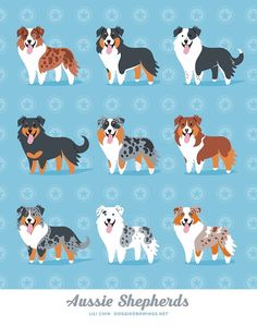 Aussie Shepherds art print by doggiedrawings on Etsy