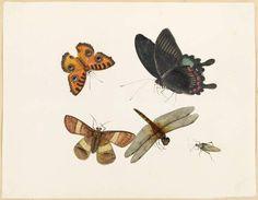 Yet more creepy-critters. Cambridge, Moth, Creepy, Insects, Animals, Animales, Animaux, Animal, Animais