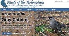 The arboretum birding webpages are an exciting tool for birdwatchers visiting the EJC Arboretum at JMU!  http://www.jmu.edu/arboretum/apps/birds/index.php