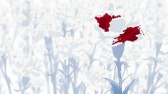 """pudding-shota: """" FLOWER SYMBOLISM IN TOKYO GHOUL From this gif post (taken with permission) First off, we have White carnation: innocence, remembrance This could both represent the Keneki we see at..."""