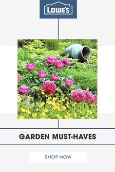 Astonishing 15 Best Lowes Garden Center Displays Images Garden Center Machost Co Dining Chair Design Ideas Machostcouk