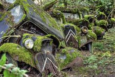 Abandoned cars slipping into #Nature. #Beauty #Classic #RustinPeace