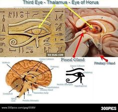 Third Eye, The Eye of Horus Connection to Human Brain - 300Pics