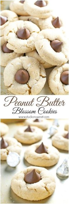 Peanut Butter Blossom Cookies. Chewy peanut butter cookies garnished with a Hershey's kiss. These are so good and perfect for holiday baking! | www.stuckonsweet.com