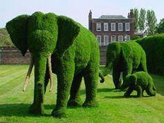 Elephant hedges