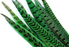 9-11 Inch Ringneck Pheasant Tail Feathers. (5) Dark Green Long Thin Bird Quills for Making Christmas Wreaths. A Banded Decoration for Masks Peacock Bird, Brown Bird, Pheasant, Craft Patterns, Stone Pendants, Etsy Handmade, Jewelry Supplies, Beautiful Necklaces, Dressmaking