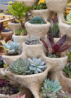 Love how the succulents are planted in this 'strawberry pot'-type planter. We already have some of those. It would be nice to add a bunch more in the backyard interspersed with the overall design in certain areas in which succulents are planted.