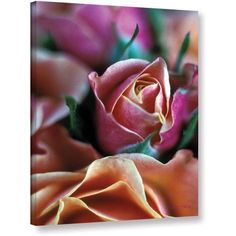 Kathy Yates Mauve And Peach Roses Canvas Art, Size: 16 x 24, Green