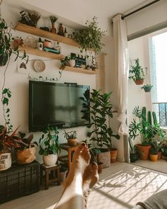 Reposted from ( - Put your feet up enjoy the view and have a fabulous weekend! by Salateando - Room With Plants, House Plants Decor, Plant Decor, Home Living Room, Living Room Decor, Bedroom Decor, Bedroom Apartment, Apartment Therapy, Tv Wall Decor