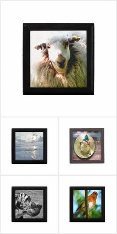 A range of designs based on floral, animals and abstract originating from photography and art. Gift Boxes, Abstract, Floral, Gifts, Animals, Collection, Design, Decor, Art