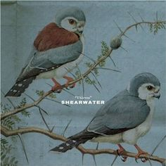 Shearwater - Thieves