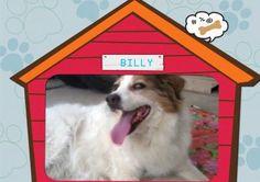 Billy and me » Fbsocialpet.com: il social forum per cani, gatti, cavalli, tutti gli animali