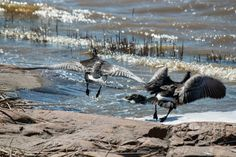 Photographs, Bird, Nature, Animals, Naturaleza, Animales, Animaux, Photos, Birds