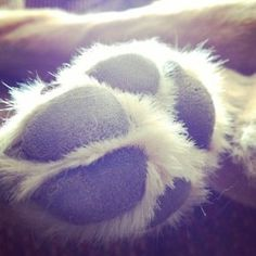.Puppy paws...I hear they smell like fritos