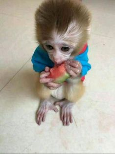 If you think Monkeys are the cutest--check out our selection of Monkey Slippers for kids and adults! Monkey Pictures, Baby Animals Pictures, Funny Animal Pictures, Animals And Pets, Smart Animals, Wild Animals, Baby Puppies For Sale, Tiny Puppies, Cute Puppies