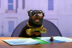 Anxious about this year's election? Your salvation might be found in this 85-minute Funny or Die/Hulu special starring a talking dog puppet.