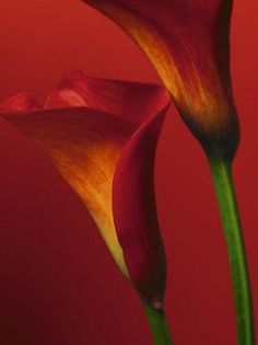 calla I have this pic in my bedroom :)