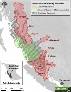 Coastal grizzly hunt territories eyed for purchase by First Nations, enviros