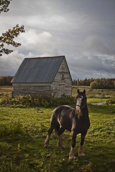 Nova Scotia,