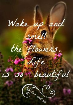 "Wake up and smell the flowers quote via ""Sixties and 60"" at www.Facebook.com/pages/-Sixties-and-60/276454592397627"