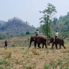 ช้าง• #naiyanainchiangmai2015 #thailand_allshots #igth