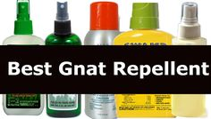Looking to buy gnat repellents to end the problem of those pesky and biting gnats. Find all the information about choosing the best gnat repellent. Best Mosquito Repellent Spray, Insect Repellent, Gnat Bites, Gnat Spray, How To Get Rid Of Gnats, Homemade Bug Spray, Bug Spray Recipe, Alien Life Forms, Health And Fitness