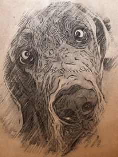 ARTFINDER: Cross eyed Great Dane - Fusain style by Suzanne Jones - I scanned the artwork image into my computer and digitally enhanced the image to create a Fusain style - digitally enhanced artwork. Artwork is printed using...