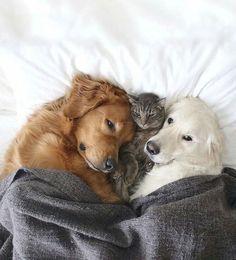 Hope your snuggled up like this tonight   #havetolove #doggies #kitten #nightnight #sleeptight havetolove-com.myshopify.com