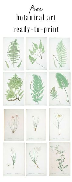 My favorite source for free, ready to print botanical art.  These prints look great as a grouping or gallery wall.  Pin me or click through!  #artwork #botanical #freeprintable #diyhomedecor #homedecorideas