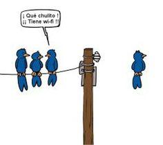 humor pajaros con wifi