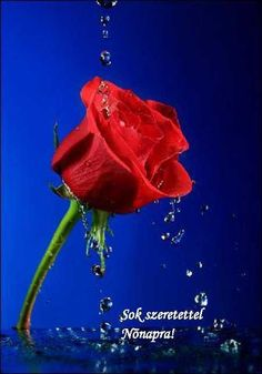 """Search Results for """"hd rose flower wallpapers for android"""" – Adorable Wallpapers Rose Flower Wallpaper, Most Popular Flowers, Hybrid Tea Roses, World Of Color, Beautiful Roses, Flower Power, Perennials, Red Roses, Red And Blue"""