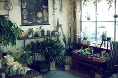 buddhabrot:  Portland, Oregon: Pistils Nursery shot by Laura Dart