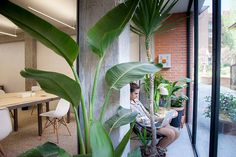 la parra coworking Plant Leaves, Plants, Events, Plant, Planets