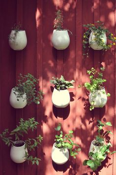 Herbs on the wall.