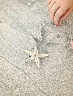 "Paisley & Lace - nature-and-culture: ""This week on the beach/Dubai. Beach Bum, Summer Beach, Summer Vibes, Summer Fun, Summer Days, Am Meer, Beach Cottages, Sea Shells, Seaside"