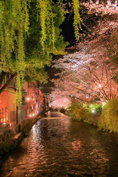 The river is central to the city - meandering through the glorious cherry trees at night in Gion, Kyoto: photo by KITAYAMA Toma