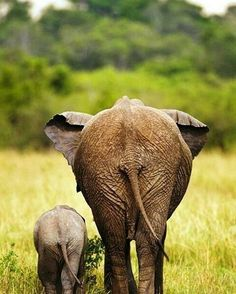 From : @iloveelephant262 . . For info about promoting your elephant art or crafts send me a direct message @elephant.gifts or email elephantgifts@outlook.com . Follow @elephant.gifts for beautiful and inspiring elephant images and videos every day! . #elephant #elephants #elephantlove