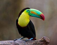 En güzel kuş resimleri burada!